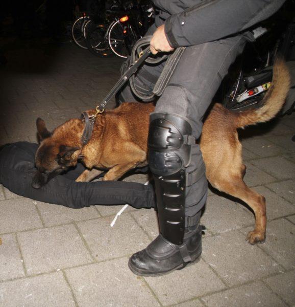 Chien de la police mordant un manifestant turc à Rotterdam