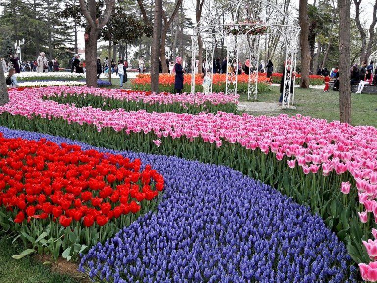 istanbul tulipes
